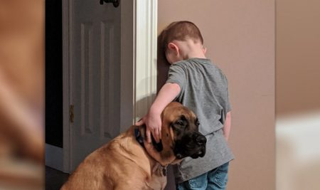 Loyal Puppy Won't Let Their Brother Suffer Time-Out Alone